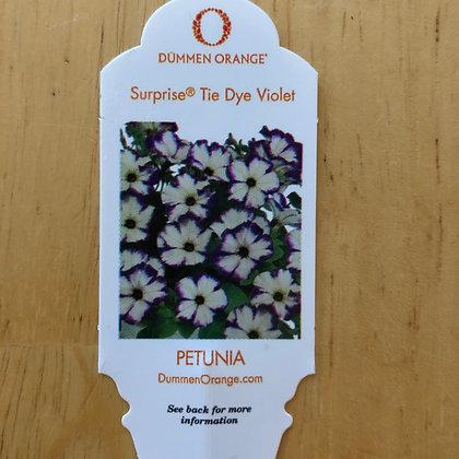 Petunia - Surprise Tie Dye Velvet : 4 inch pot