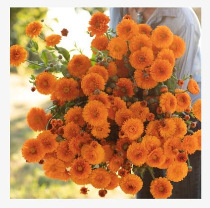 Calendula Greenheart Orange - 4 pack