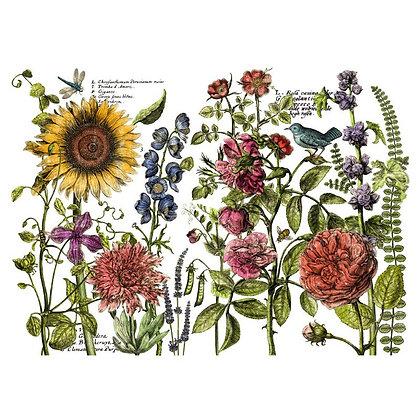 Botanist's Journal IOD Decor Transfer - 24 x 33