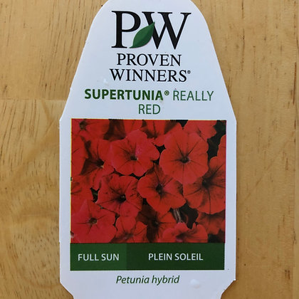 Petunia Hybrid - Supertunia Really Red : 4 inch pot
