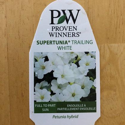 Petunia Hybrid - Supertunia Trailing White : 4 inch pot
