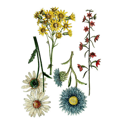 Wild Flower Botanicals IOD Decor Transfer - 24 x 33