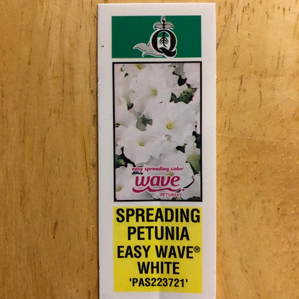 Wave Petunias - Easy Wave White : 6 pack
