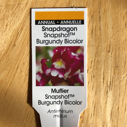 Snapdragon - Snapshot Burgundy Bicolor : 4 pack