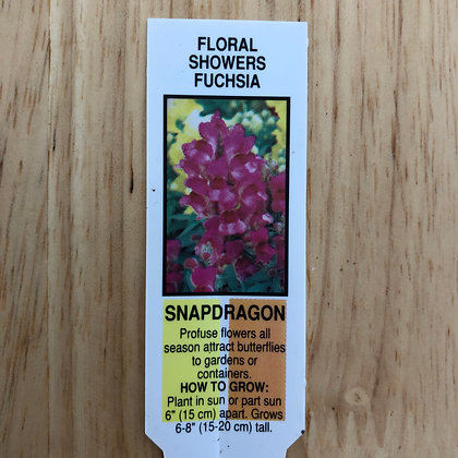 Snapdragon - Floral Showers Fuchsia : 4 inch pot
