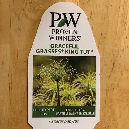 Graceful Grasses King Tut : 1 gallon pot