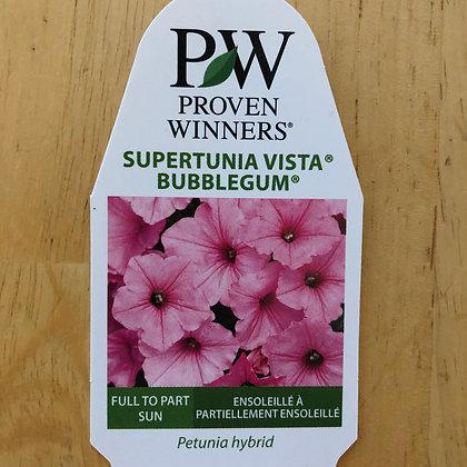 Petunia Hybrid- Supertunia Vista Bubblegum : 4 inch pot
