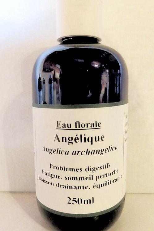 Angélique graines (Angelica archangelica)