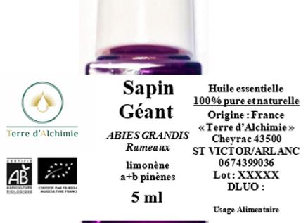 HE Sapin Géant