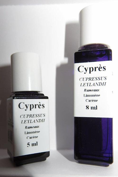 Cyprès (Cypressus leylandii)
