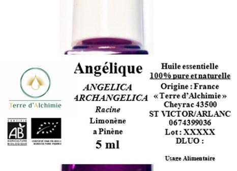 HE Angélique (Racines)