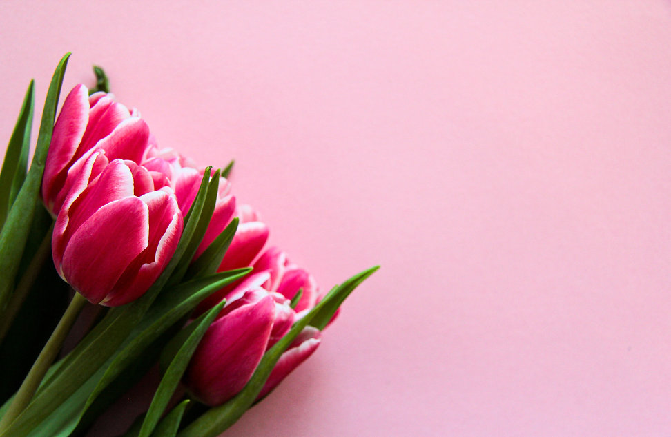 Canva - Pink Tulips On Pink Surface.jpg