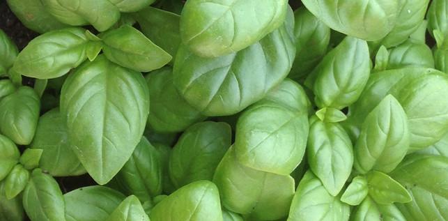 basilic-vert-pomme-poire-peche.jpg