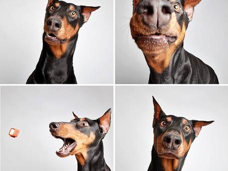 Animal Adoptions & Photo Booths