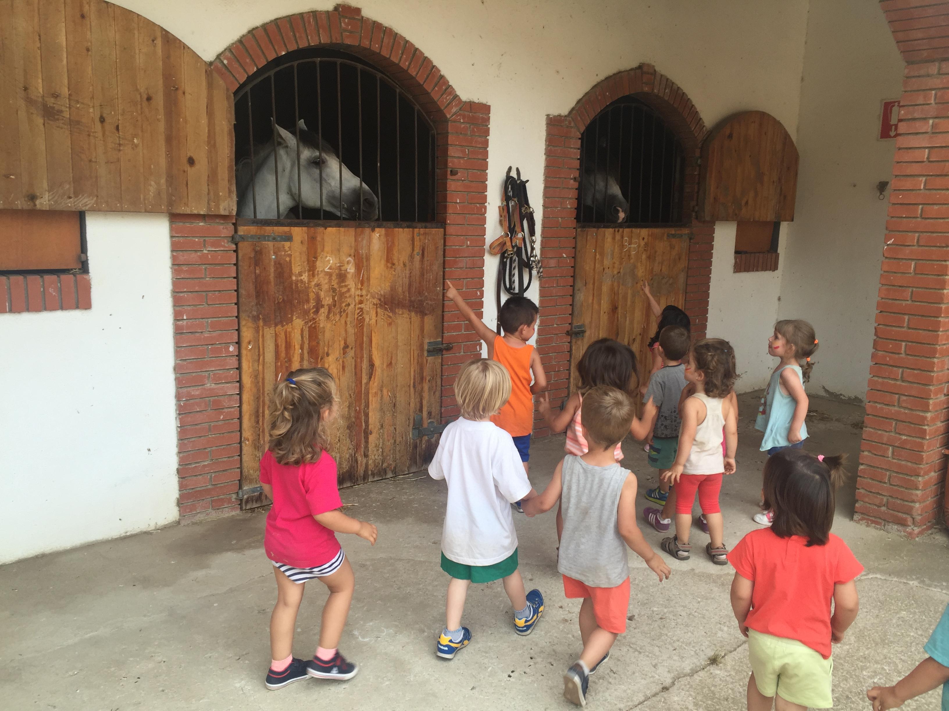 Descobrim els cavalls