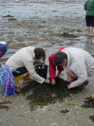 Sortie Découverte de la Pêche à Pied Côté Golfe avec Gwen