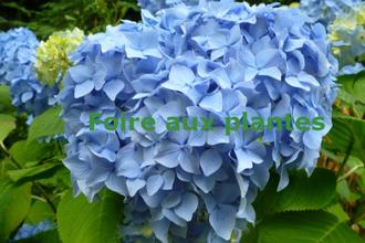 Troc plantes à Kernascléden - KERNASCLEDEN