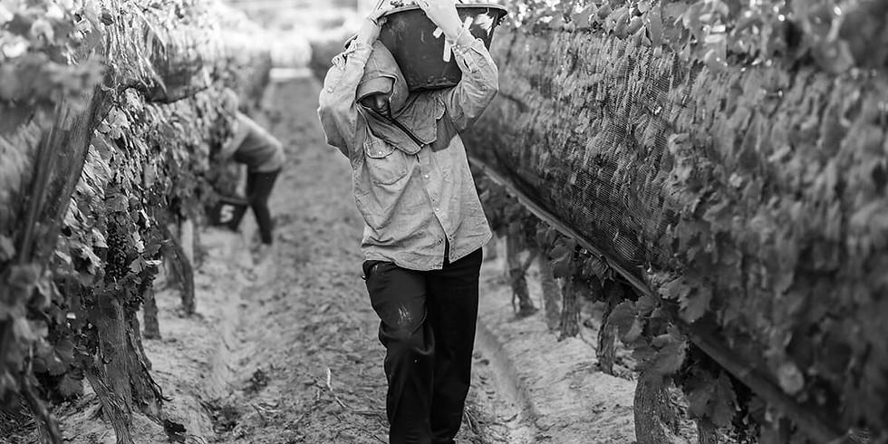 Degustación de Vinos de Autor Hermanos Durigutti