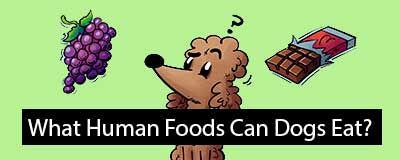 human-food-dogs.jpg