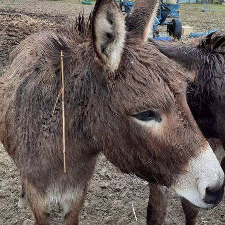 Besoin de votre aide pour les 3 ânes !!