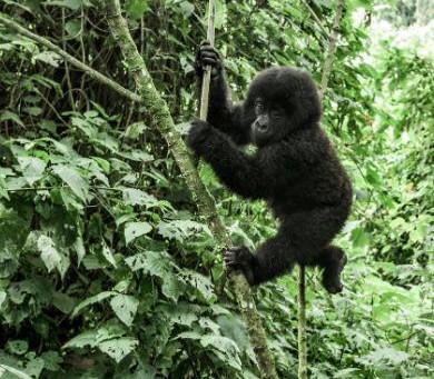 Filmtipp – Netflix Dokumentation Virunga