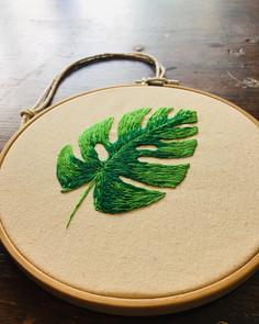 Monstera Deliciosa Leaf