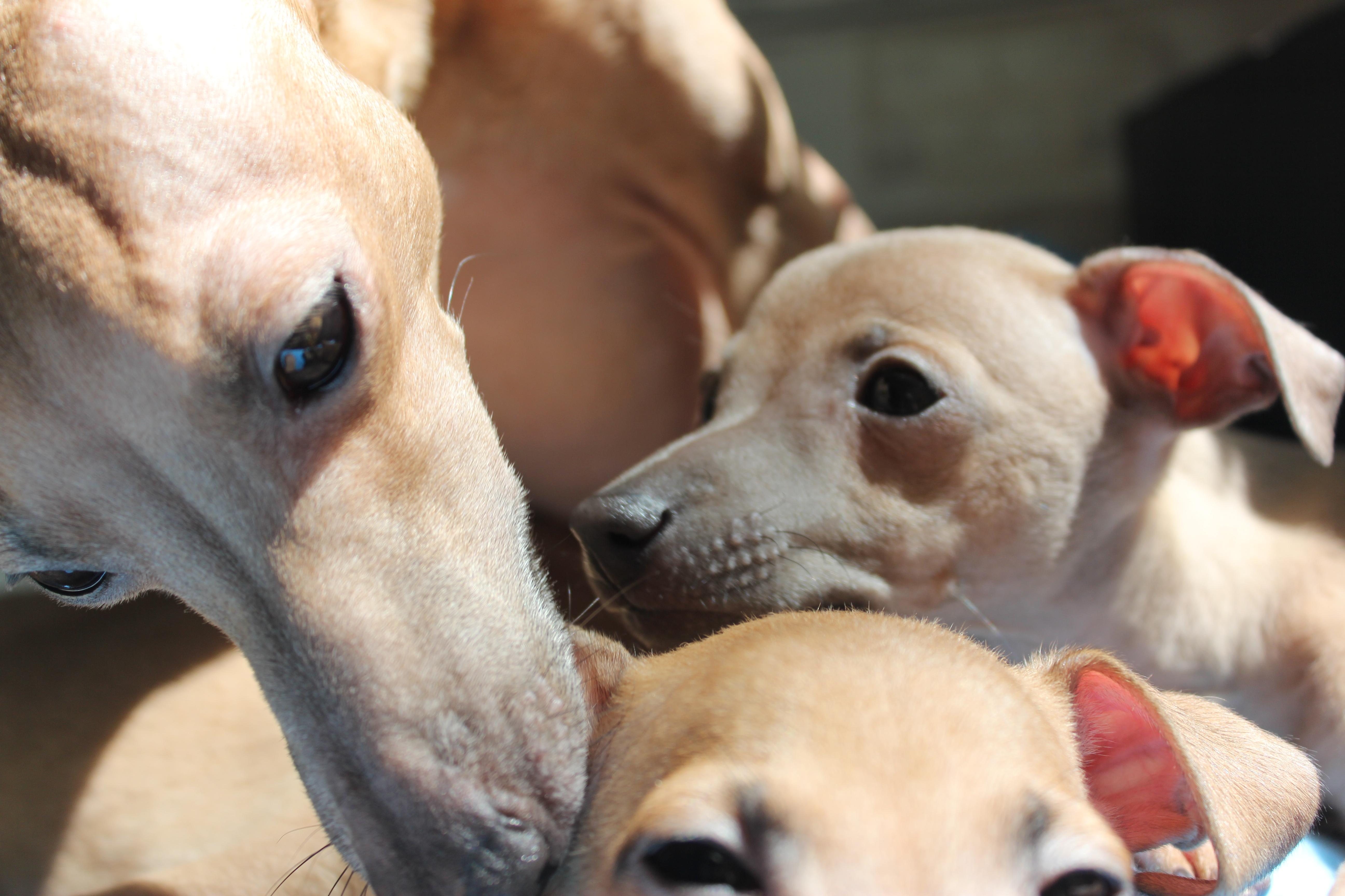 Нани с щенками