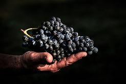 Raisin L'Or des Terres | Vin sans soufre | Vin naturel | Vin sans sulfites