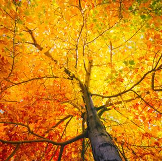 Fall colors in beautiful Munising MI