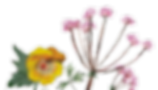 fleurs.png