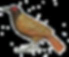 oiseau-pierrez.png