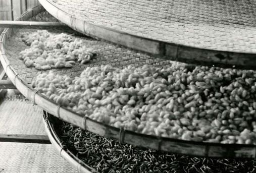 Élevage des vers à soie dans les grands plateaux. Vers sur le plateau du dessous ; cocons déjà ramassés au-dessus. Province de Takeo, commune de Bati. 1968