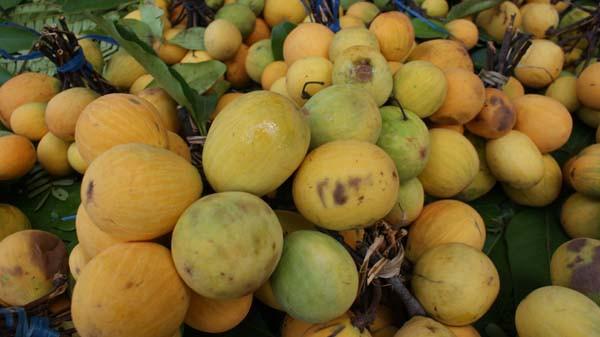 Fruit : le Kuy (ផ្លែគុយ)