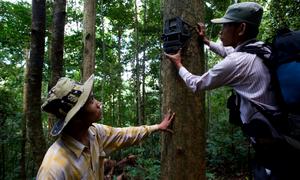 Pièges photographiques pour surveiller l'activité des éléphants. Crédit : Jeremy Holden/FFI