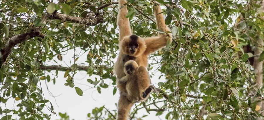 Nature & Environnement : 10 ans d'observation de la faune de Keo Seima