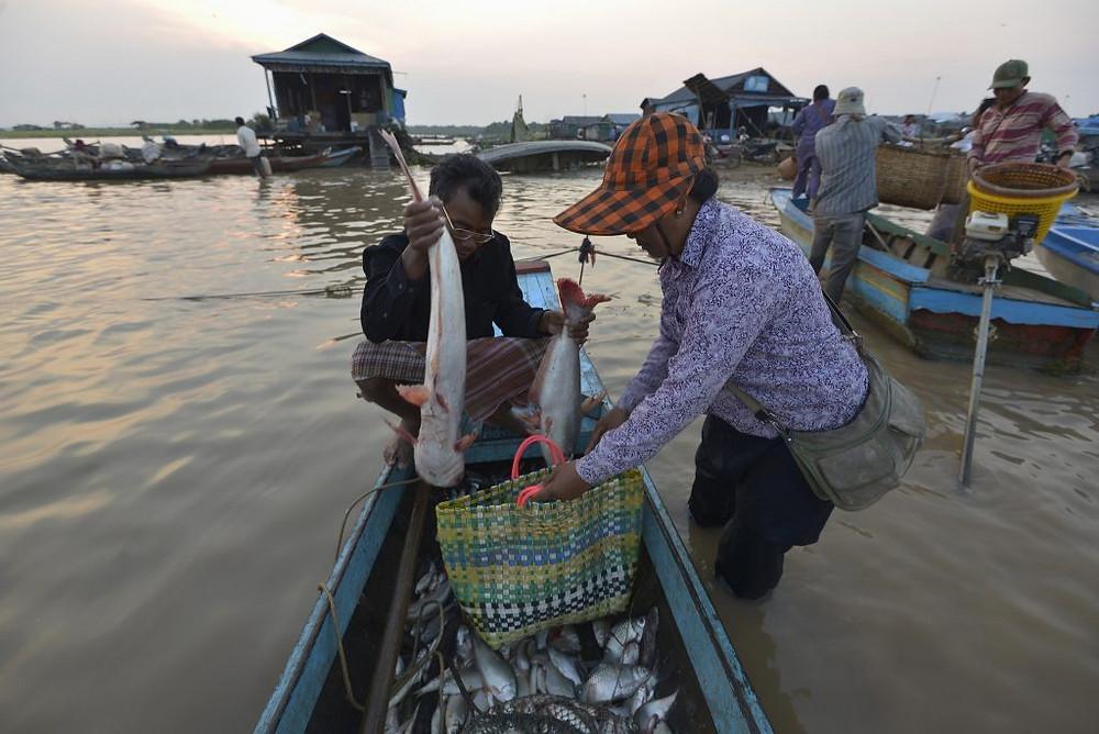 Pêcheur local vendant ses prises du matin à la jetée de Chhnoc Trou, province de Kampong Chhnang. Photo par Sylyvann Borei. (cc)