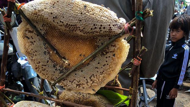 Un jeune Cambodgien observe un nid d'abeille géant