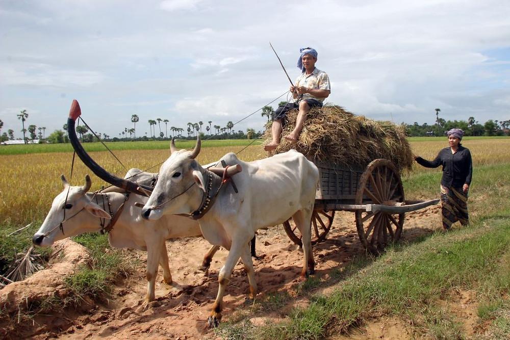 Riziculteurs - Photographie ILO (CC)