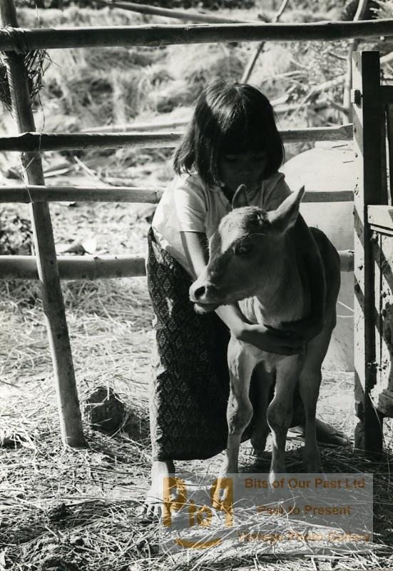 Odile Wertheimer a rencontré Sinoun, âgée d'environ huit ans. Elle va partager avec elle et son ami Vandy la vie au village : la pêche, la culture du riz, la récolte du sucre de palme, les fêtes... Ce livre publié au début des années 1970 dans la collection Enfants du Monde,  est disponible chez Amazon et propose une abondante iconographie illustrant la vie quotidienne d'une enfant avant le drame des khmers rouges. Attention, ce livre n'a pas eu de réédition et devient rare dans sa version originale.