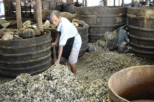 Un Cambodgien retourne les poissons destinés à la fabrication du prahok