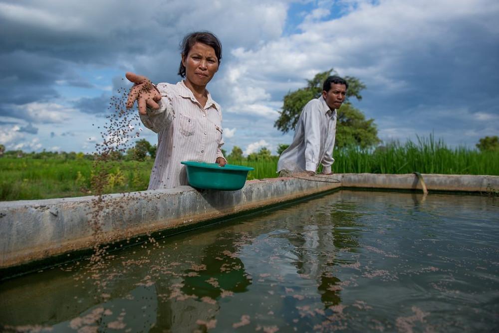 Ferme aquacole au Cambodge