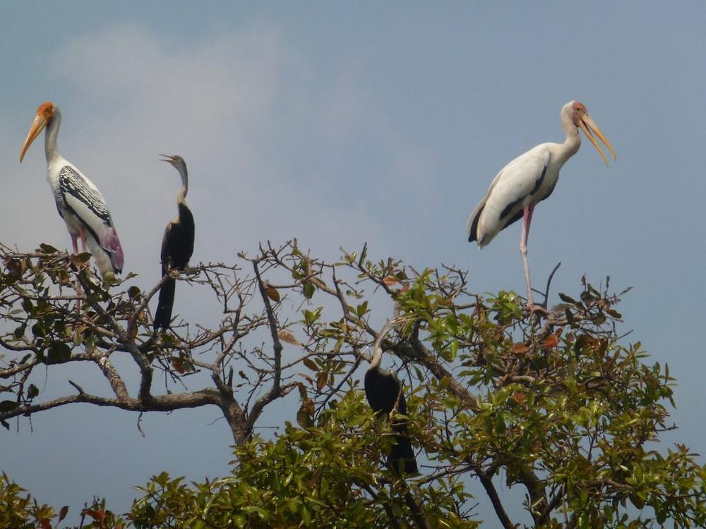 Les nombreuses menaces pesant sur la faune nécessitent une attention constante