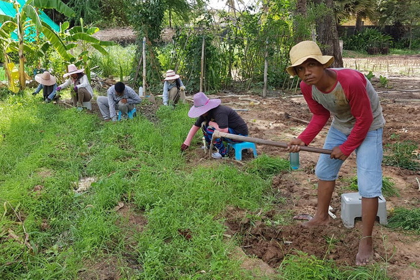 Potager avec Terre Cambodge