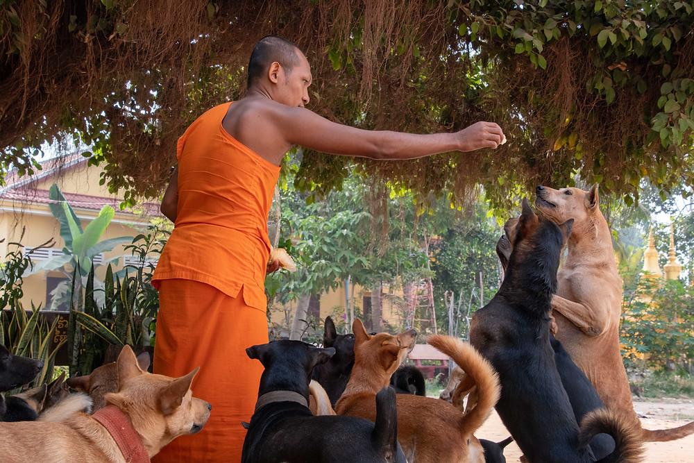 Les chiens ne sont pas oubliés : une vingtaine d'entre eux cohabitent dans la pagode