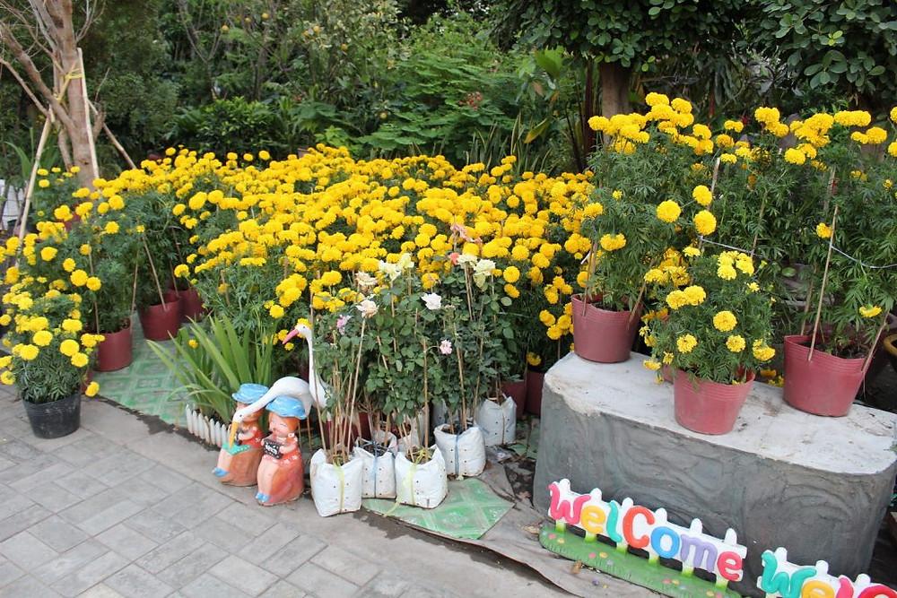 La Fête aux Chrysanthèmes