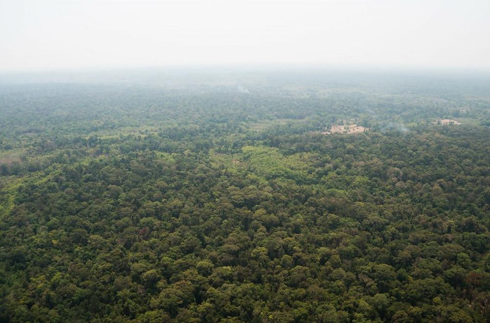 Greenid Prey Lang : 21 millions de dollars pour préserver le sanctuaire