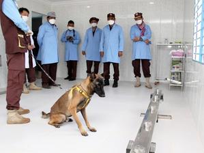 Santé & Initiative : Le Cambodge forme avec succès des chiens à la détection du coronavirus