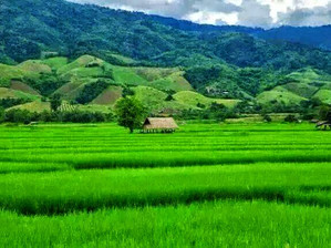 Le Cambodge, pays agricole