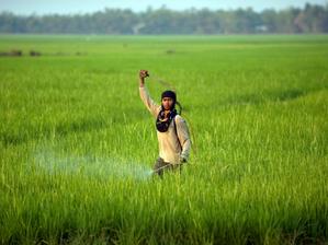 Économie : Les agriculteurs cambodgiens rencontrent des difficultés autour du lac Tonlé Sap