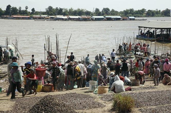 Cambodge & Agriculture : Envolée des prix du Prahok et poissons fumés